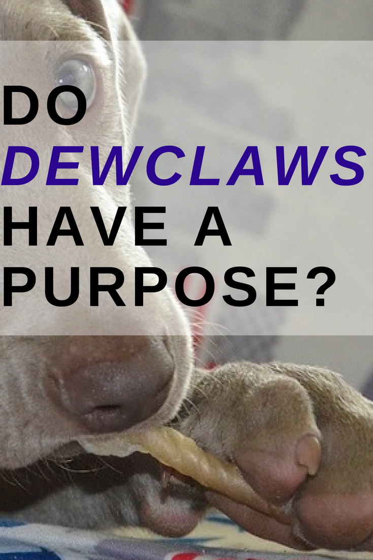 Do dewclaws have a purpose? Pin Image