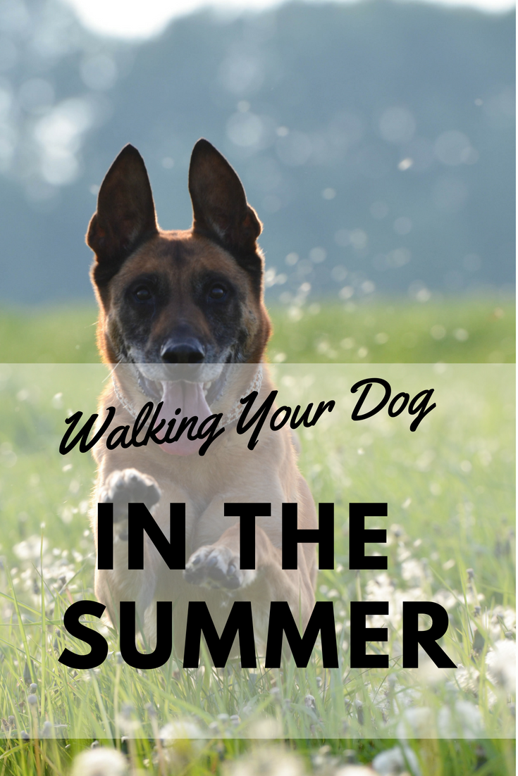 Walking your dog in the Summer Pin Image