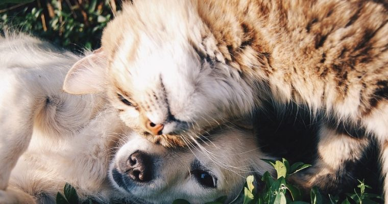 Why do dogs eat cat poop?
