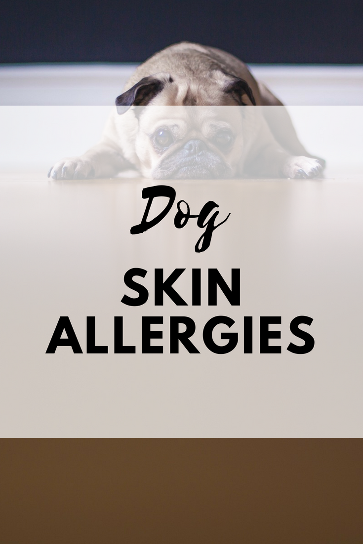 Dog Skin Allergies