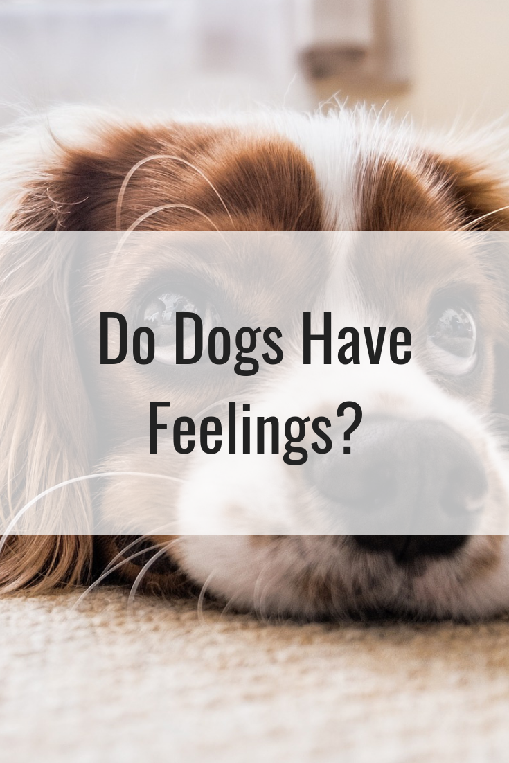 Do Dogs Have Feelings?