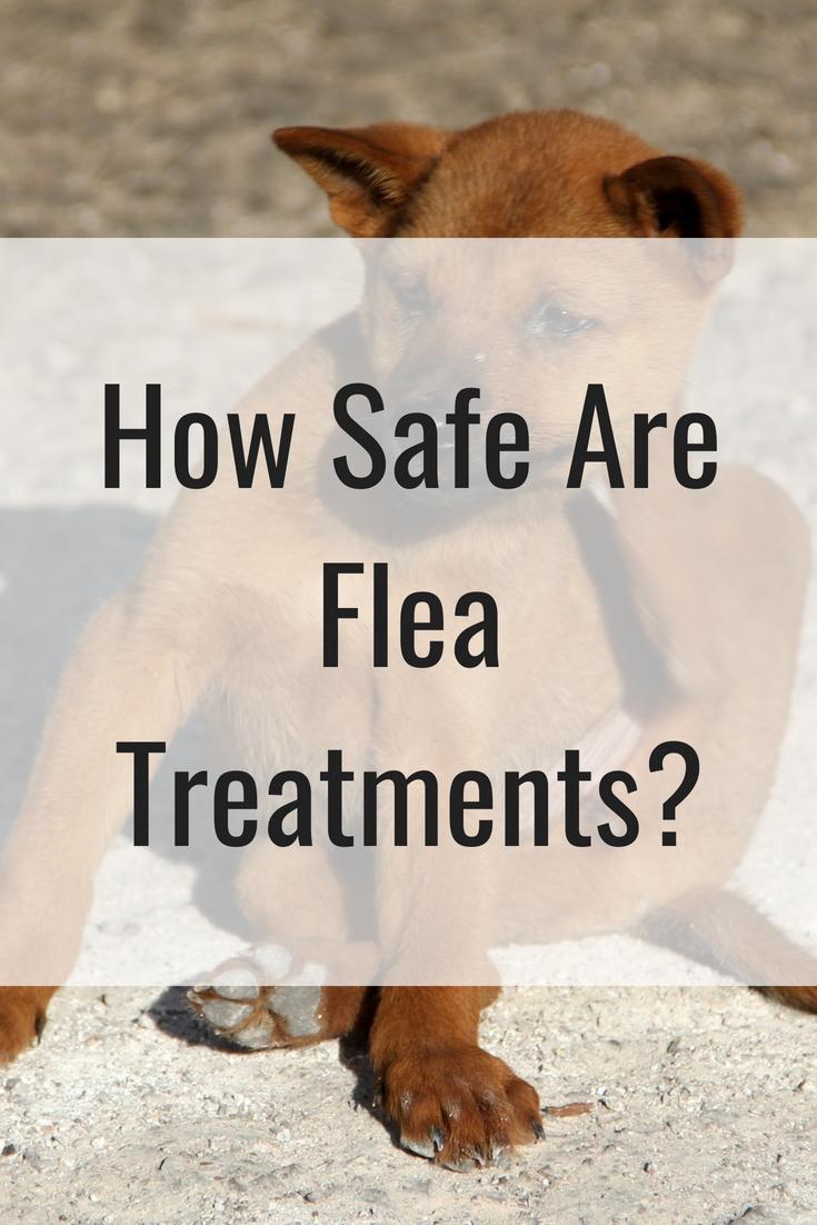 How Safe Are Flea Treatments?