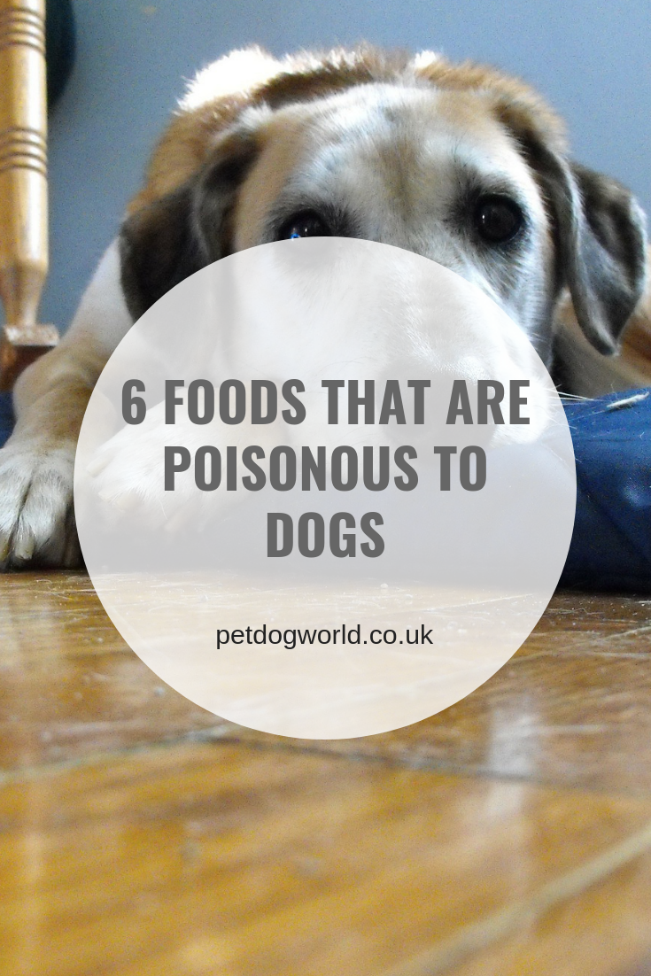 6 Foods That Are Poisonous To Dogs