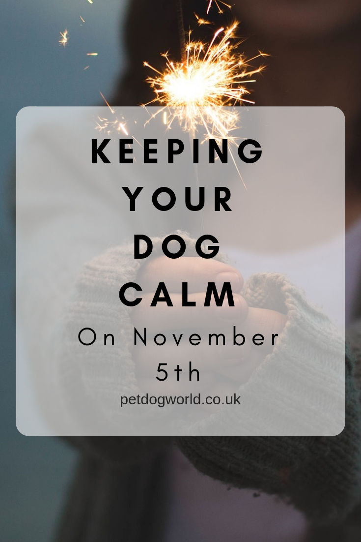 Keeping Your Dog Calm On November 5th