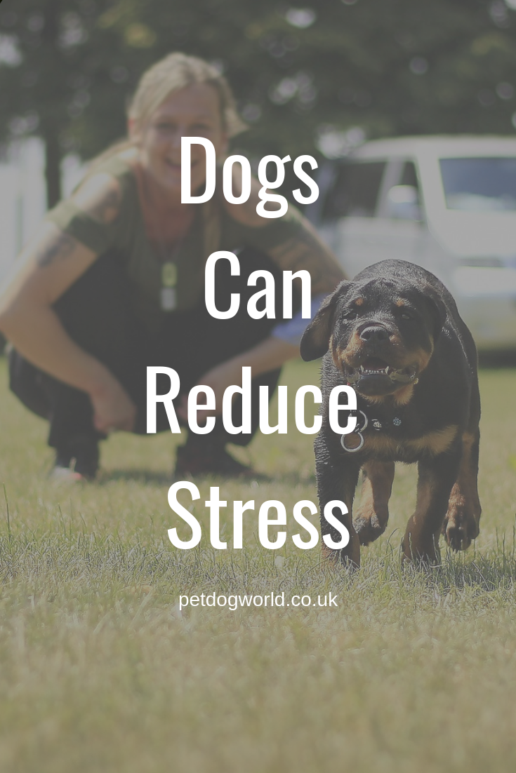 Dogs Can Reduce Stress