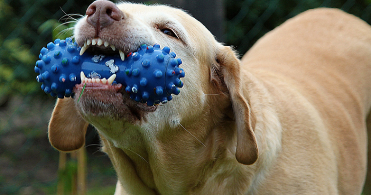 4 Ways To Stop Puppy Chewing