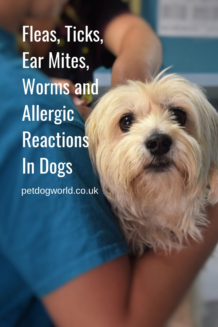 Fleas, Ticks, Ear Mites,Worms and Allergic Reactions In Dogs