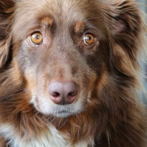 Household Items Dangerous To Dogs