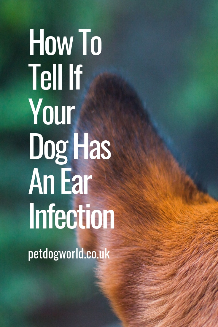 How To Tell If Your Dog Has An Ear Infection