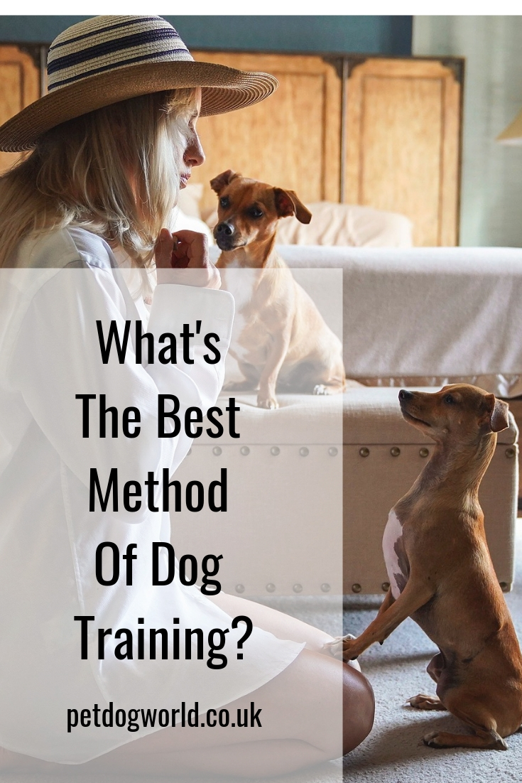 What's The Best Method Of Dog Training?