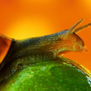 Slugs and Snails can be Harmful to Dogs