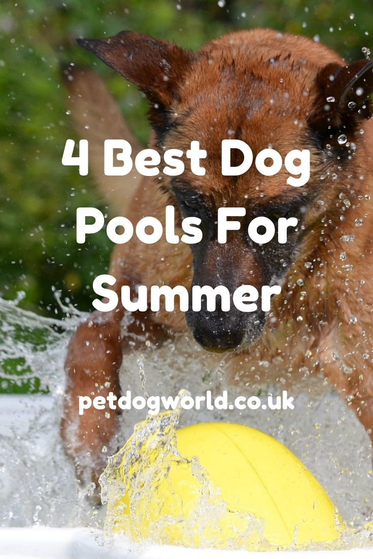 Dog pool ideas