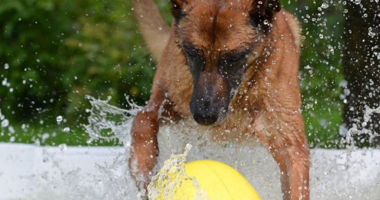 4 Best Dog Pools For Summer