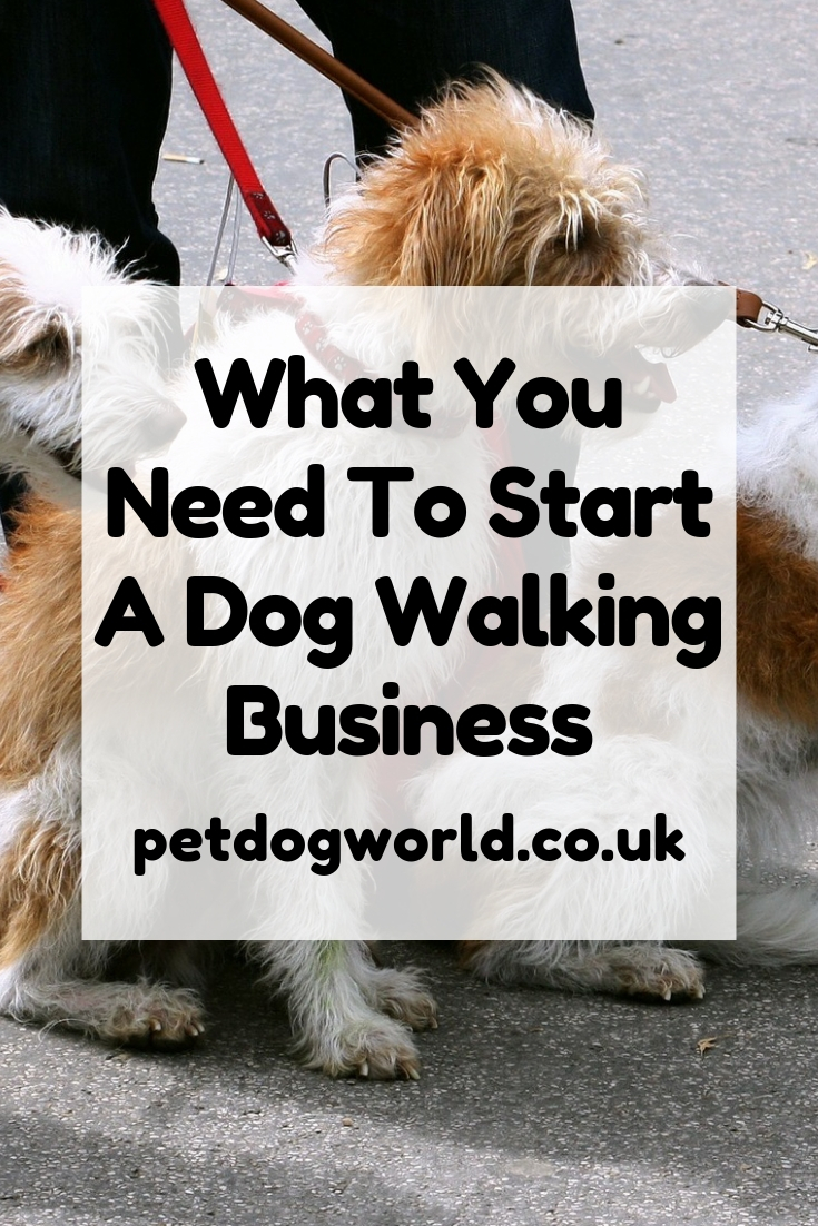 What You Need To Start A Dog Walking Business