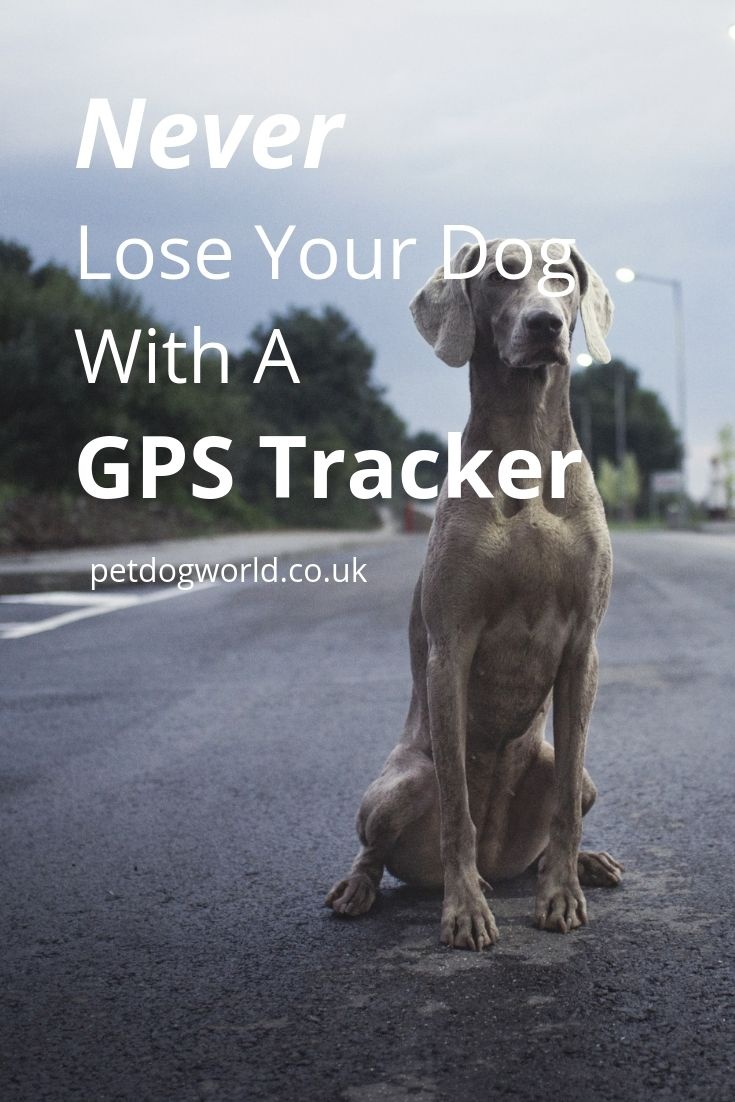 Never Lose Your Dog With A GPS Tracker