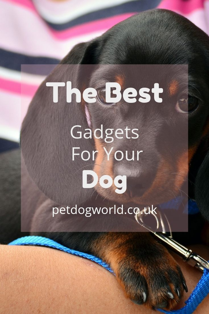 The best gadgets for your dog.