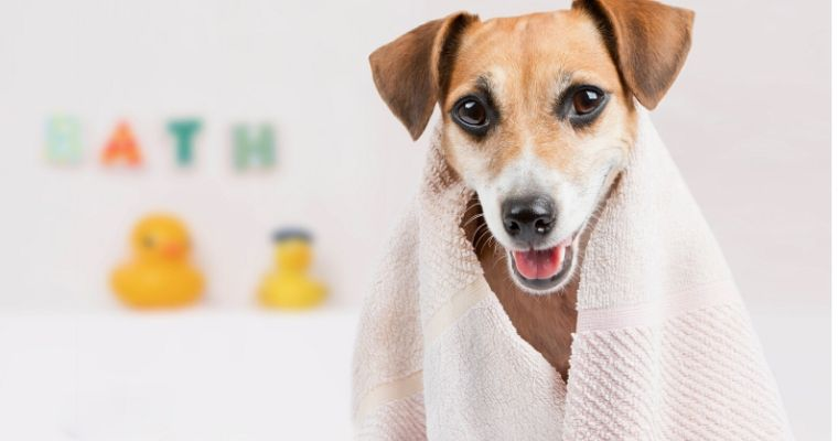 How To Keep Your Dog Clean when He Hates A Bath