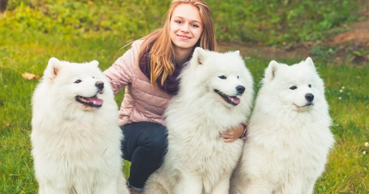 Are Samoyeds good family dogs?
