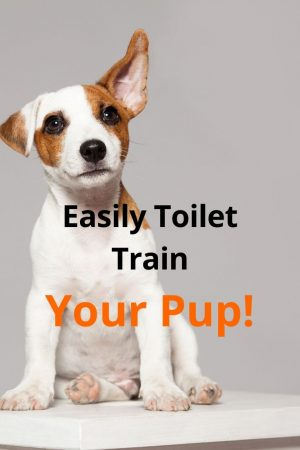 Easily Toilet Train Your Pup!