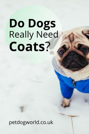 Do dogs really need coats?