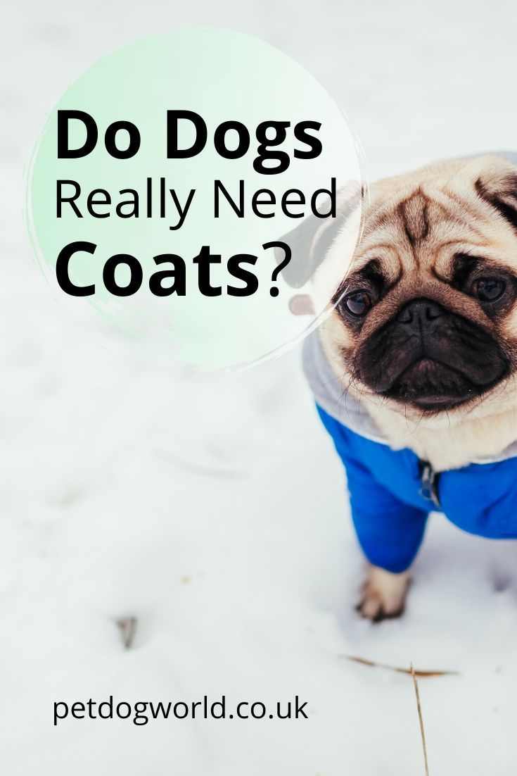 Studies by experts indicate that, with a few exceptions, dogs do not really need to wear any clothing as they have a natural protective layer.