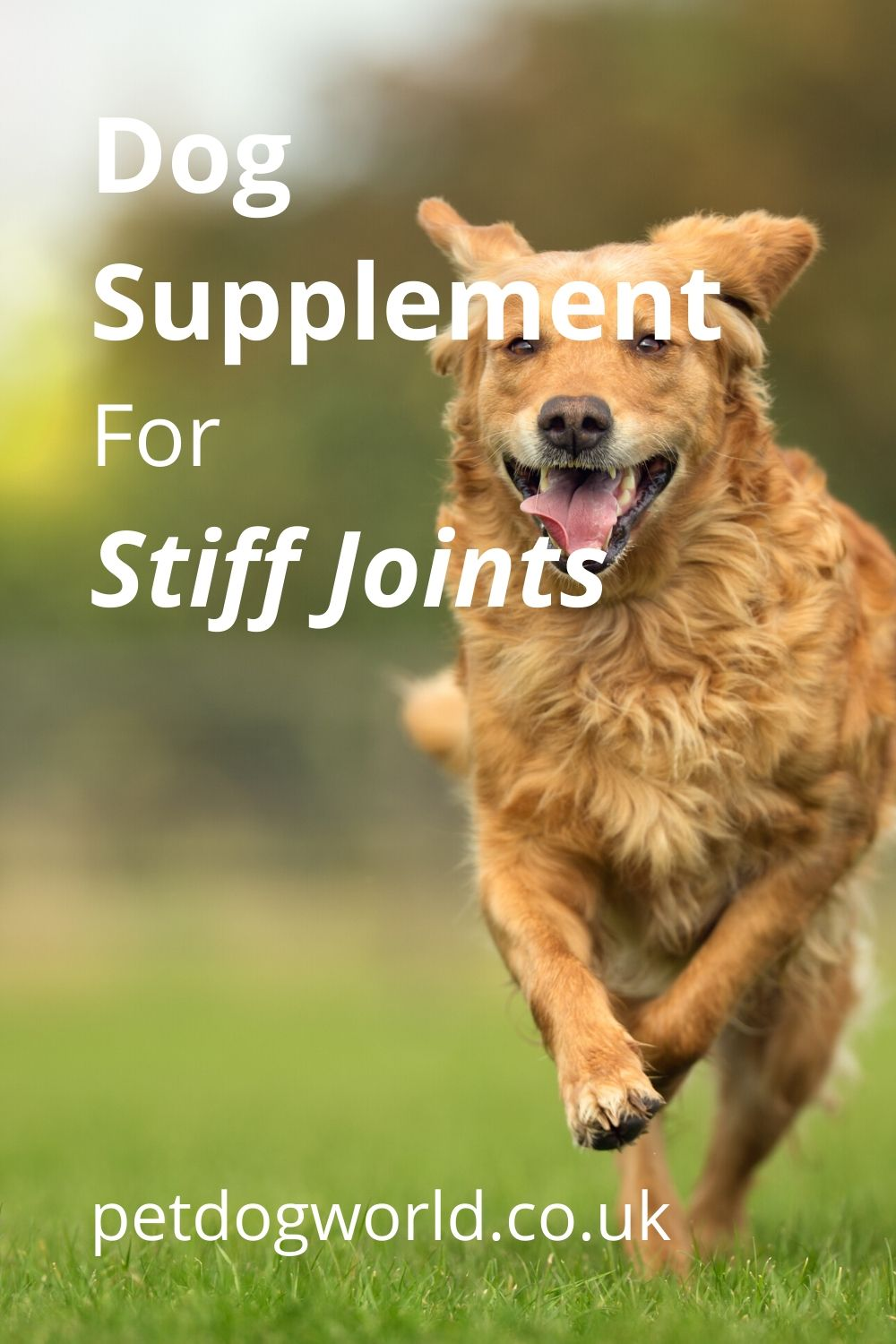 Lintbells YuMOVE Dog joint supplement is for stiff and older dogs. Clinically proven to work in 6 weeks, aids stiff joints, supports joint structure and Maintains mobility.