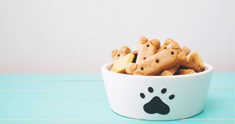 What are the Best Bowls for Dogs?