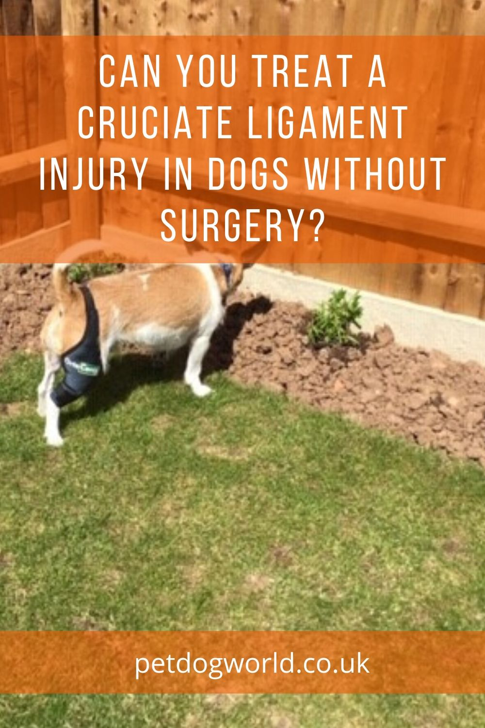Can You Treat A Cruciate Ligament Injury in Dogs Without Surgery?