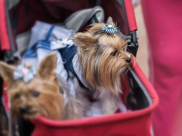 Dog Strollers For Older Dogs