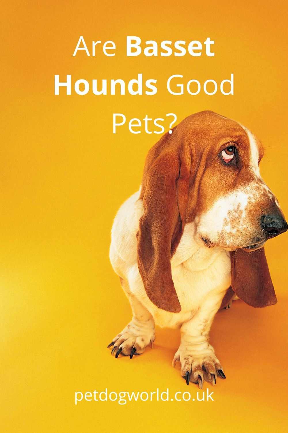 Find out if a Basset Hound is the right breed for you.