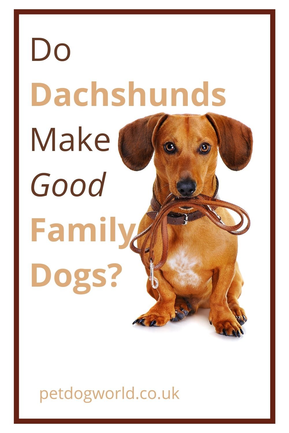 Do Dachshunds Make Good Family Dogs? Read this if you're thinking of getting one!