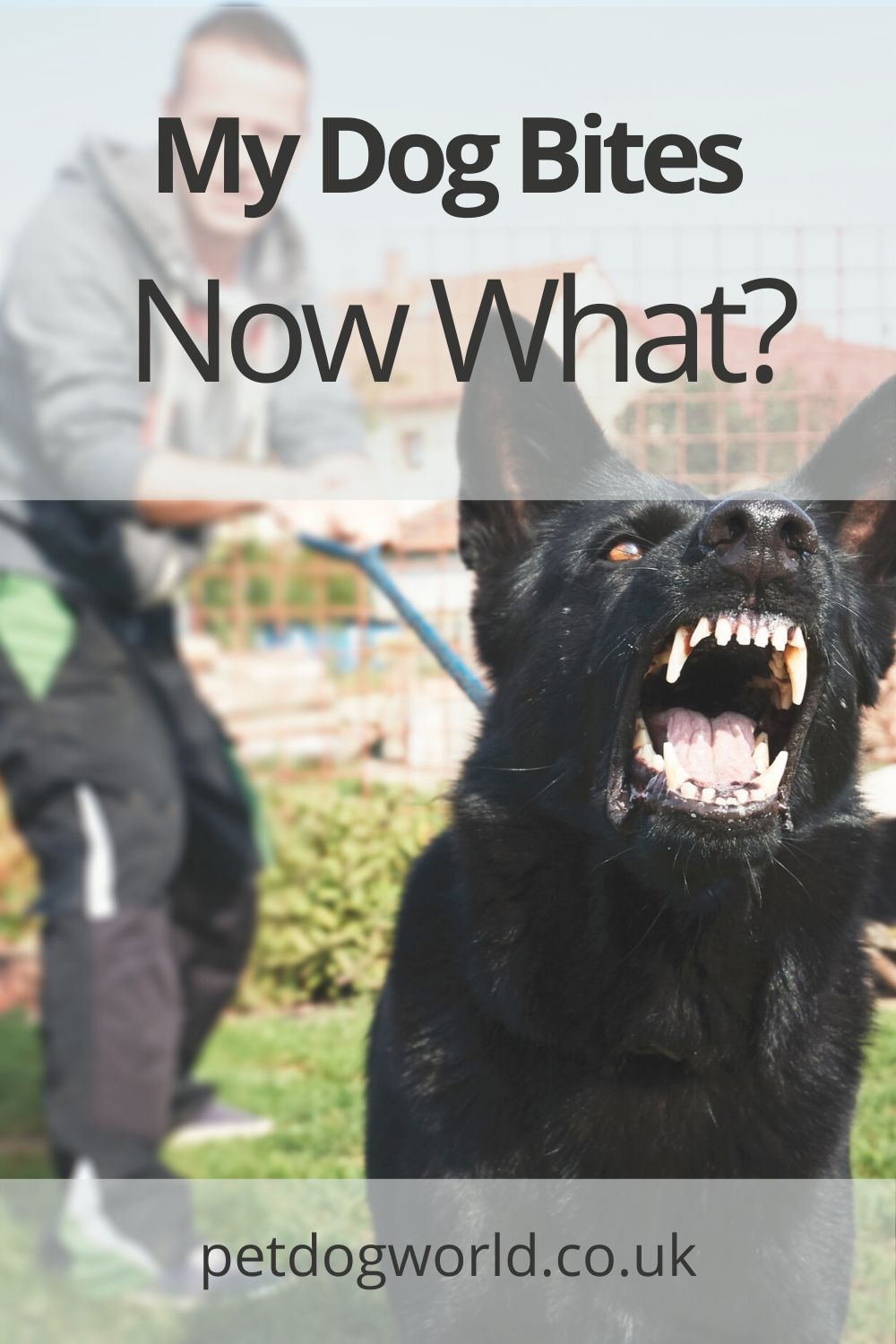 In this article, we will discuss the best ways to deal with your dog after a bite.
