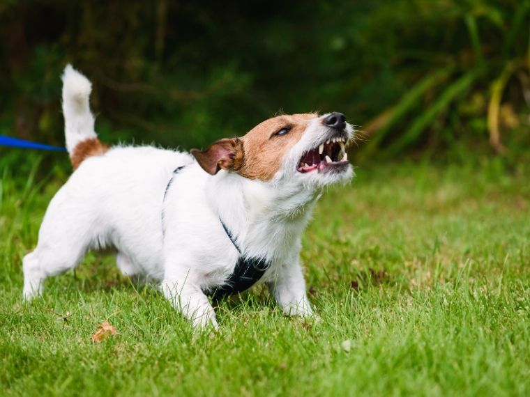 My Dog Bites - Now What?