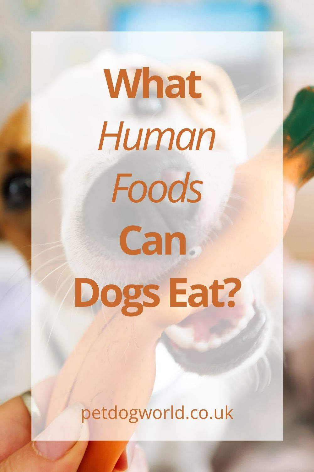 So, what are safe human foods for dogs? Let's look at some foods that are not only safe but could be beneficial to our canine friends.