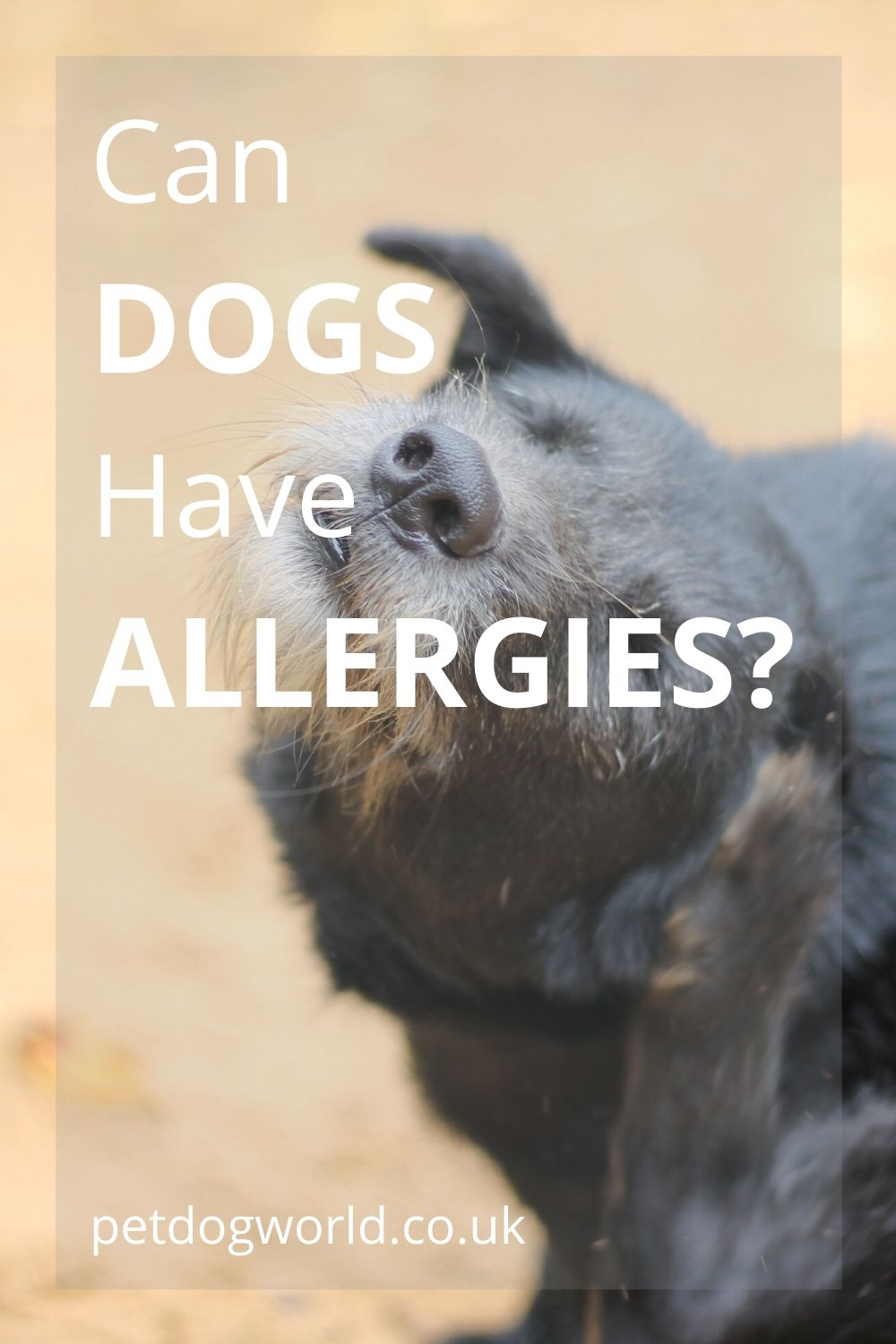 How do you know if your dog has allergy symptoms?