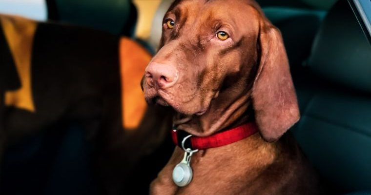 Helping Dog Car Sickness