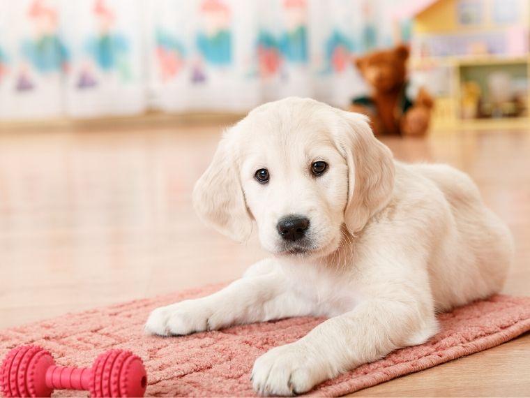 Puppy Essentials Shopping List