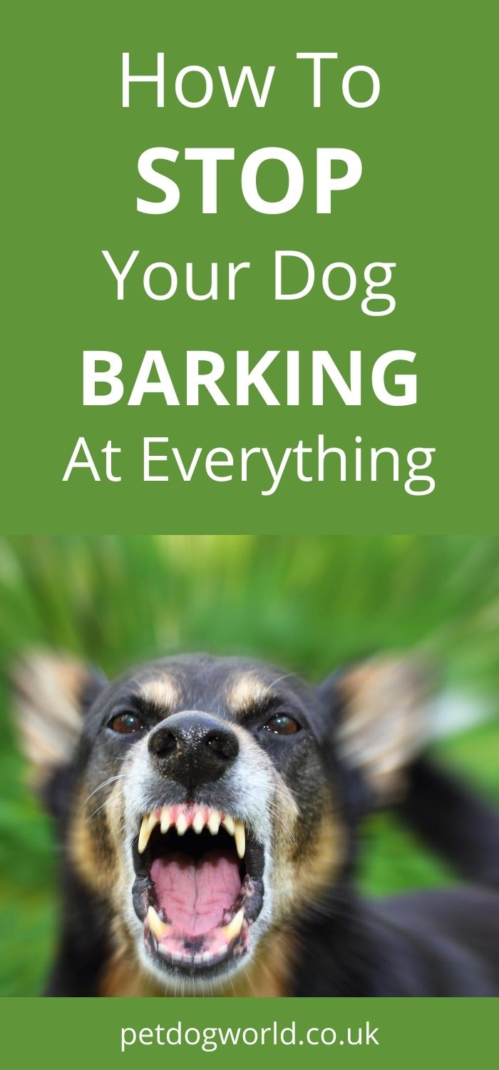 Tips on how to stop your dog barking at everything.
