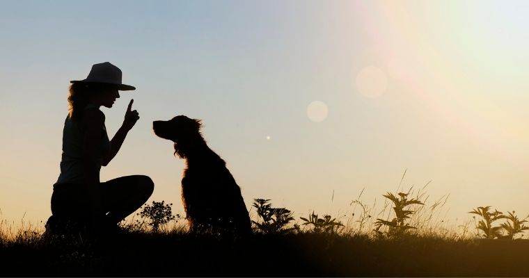5 Benefits of Dog Training