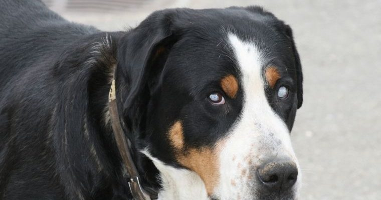 Safety Tips Living With a Blind Dog