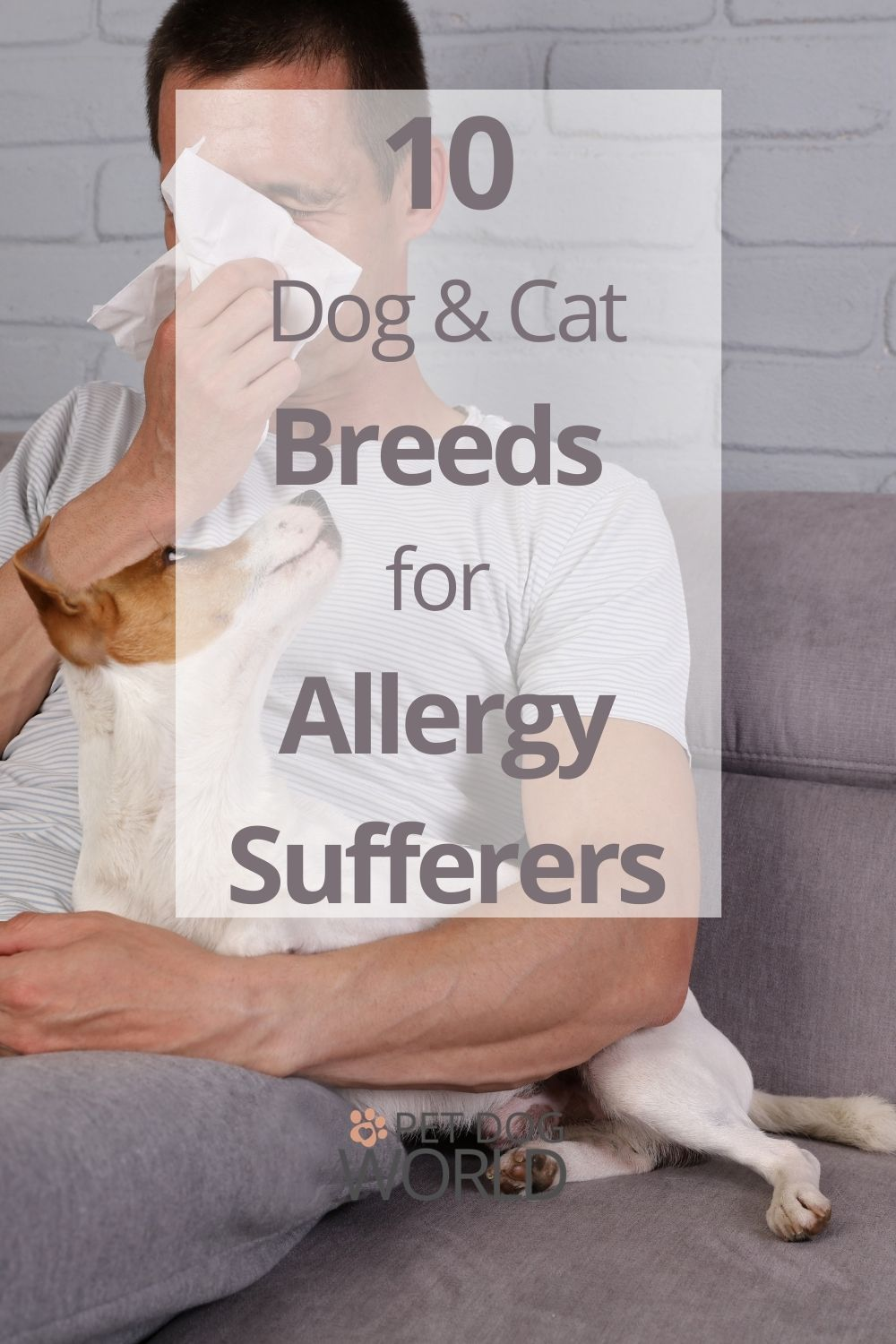 Being allergic to cats or dogs does not necessarily mean you will never be able to own one. Discover ten breeds that may finally give allergy sufferers the ability to own a cat or dog.