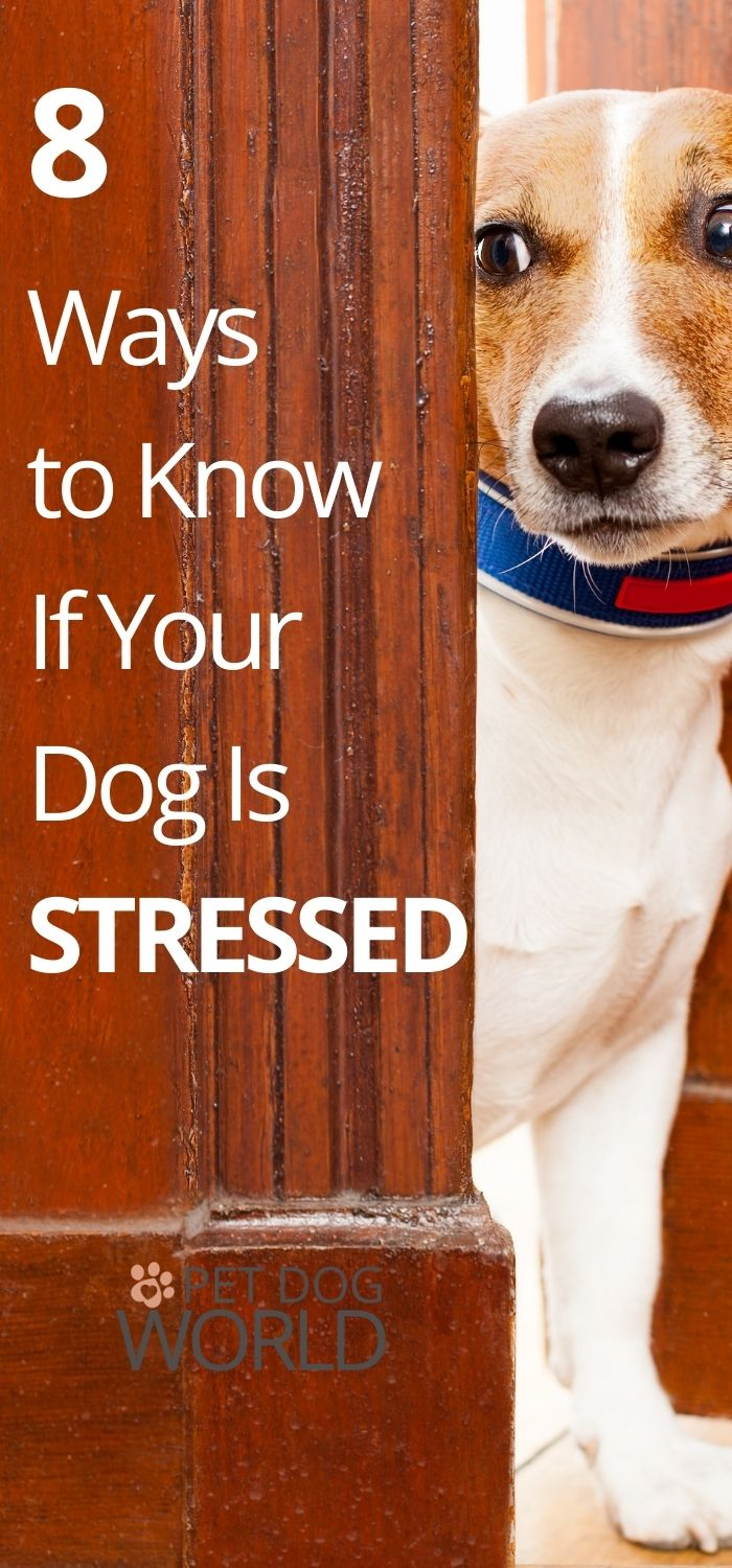 8 Ways to Know If Your Dog Is Stressed