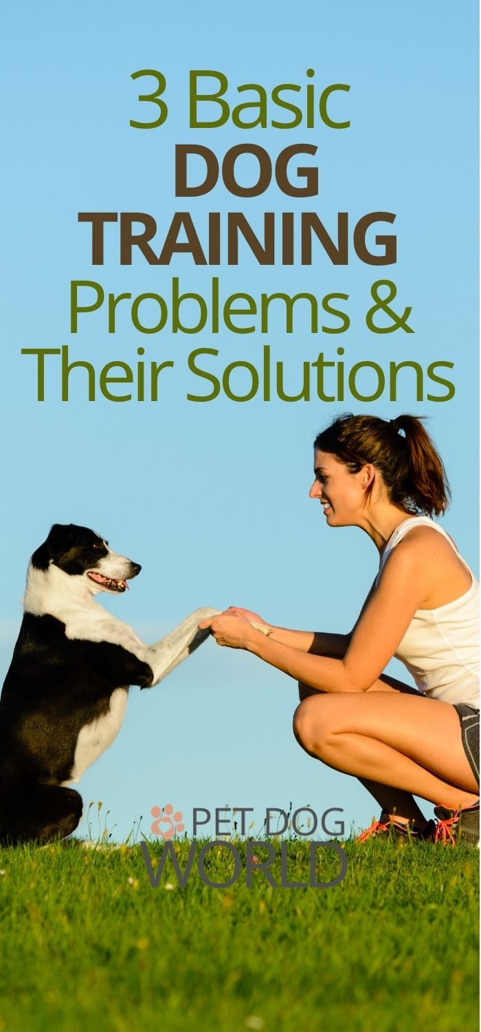 3 Basic Dog Training Problems and Their Solutions
