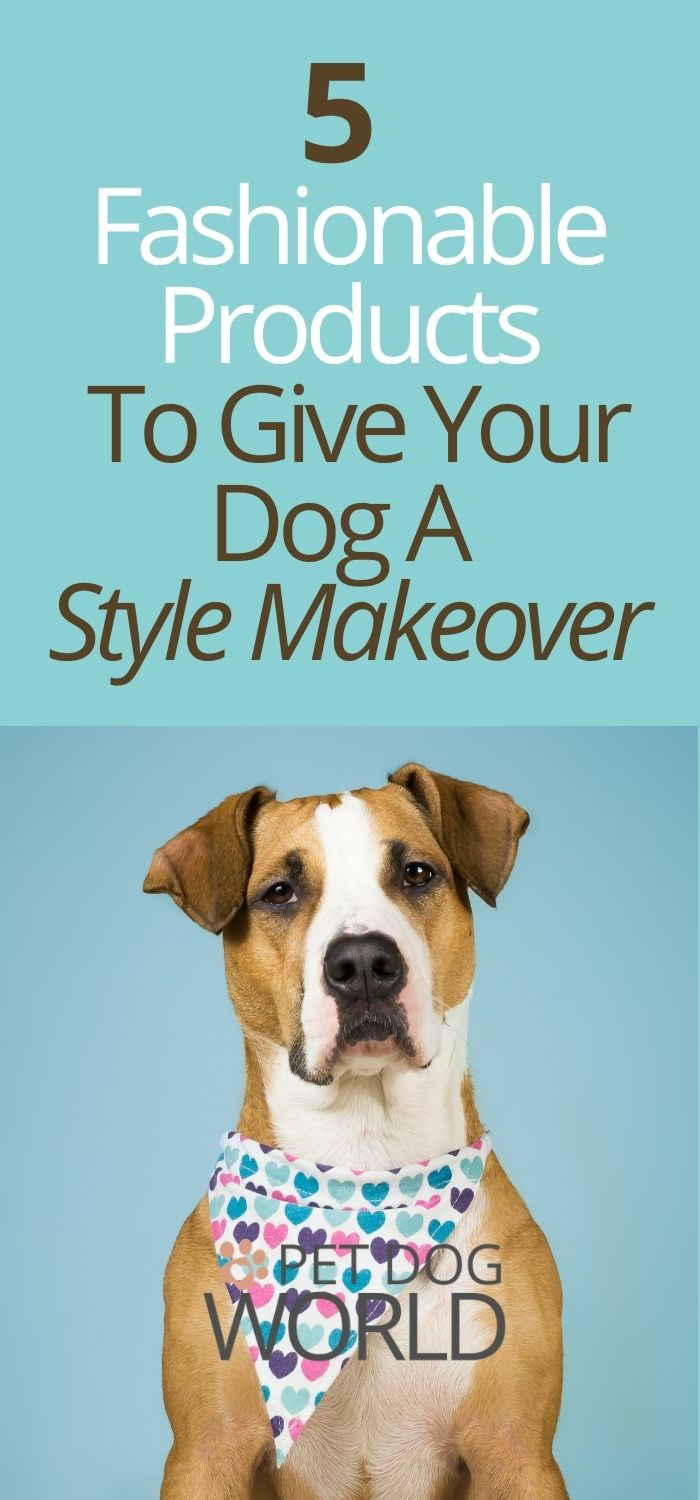 5 Fashionable Products To Give Your Dog A Style Makeover