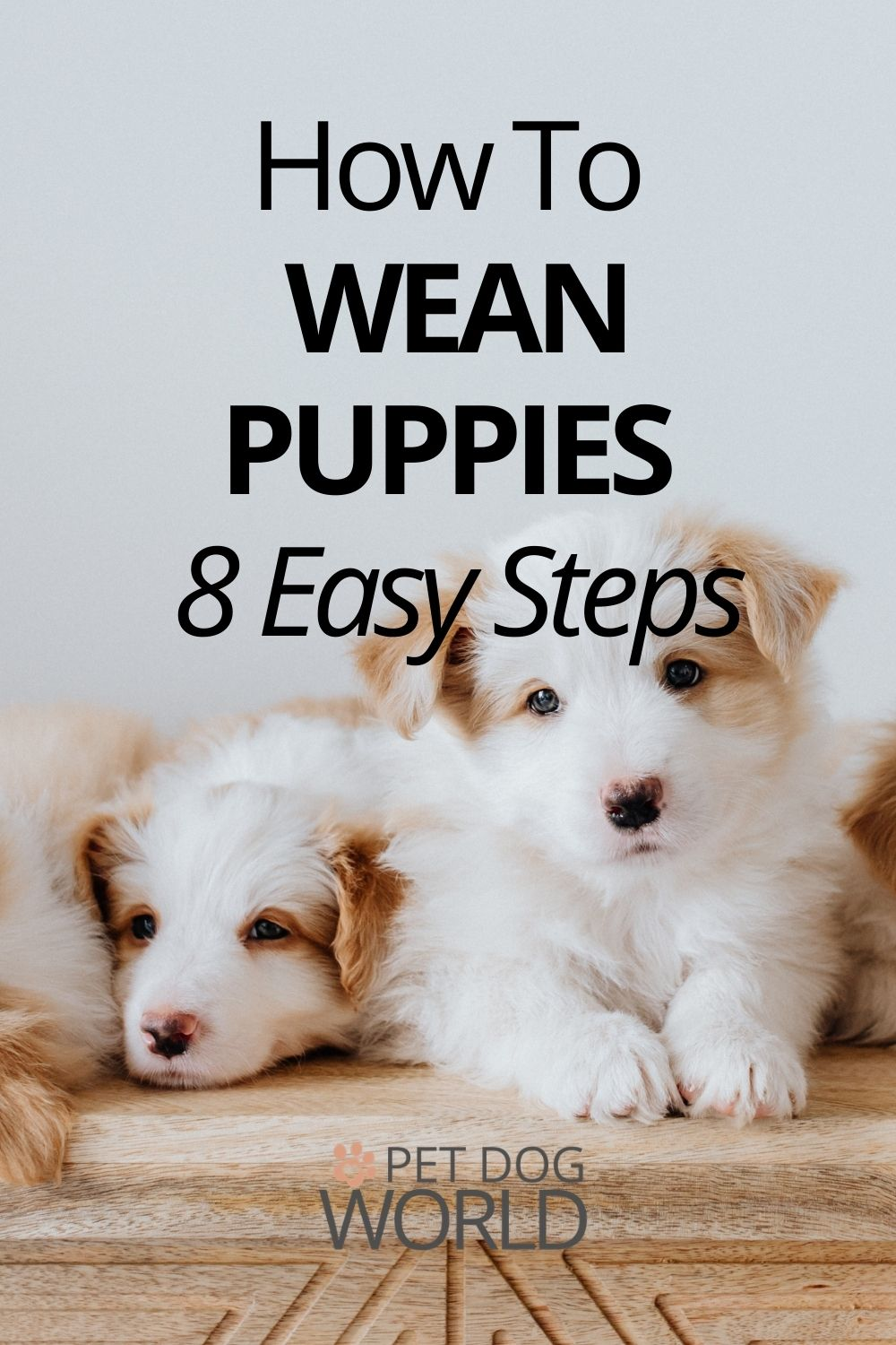 How to wean puppies in 8 easy steps