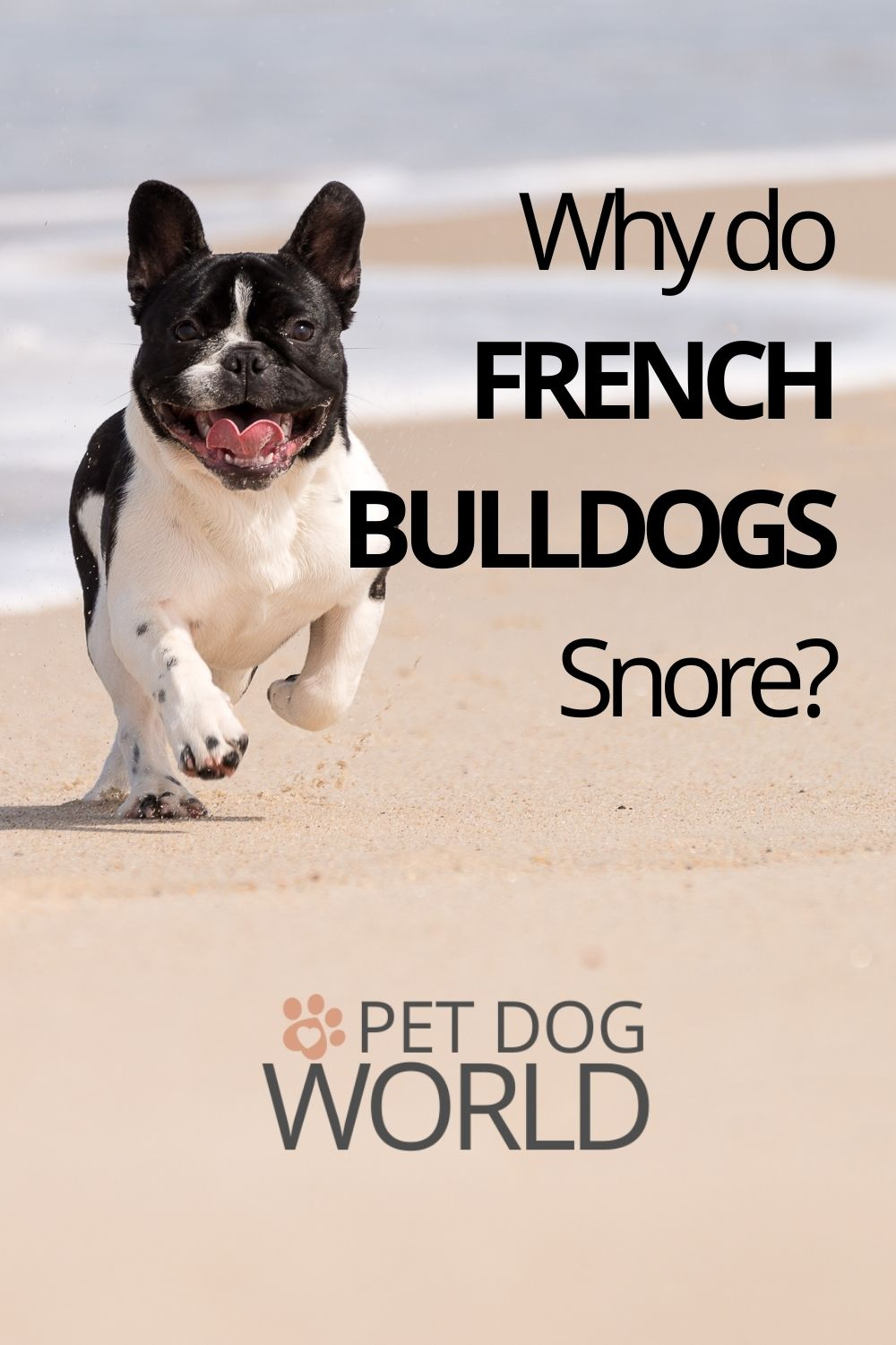 This post aims to help you understand why French bulldogs snore, when it becomes a problem, and what you can do to remedy it.
