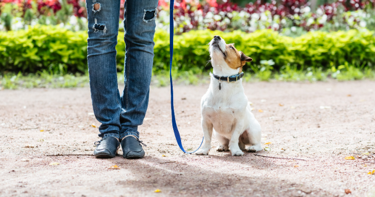 Correct Unwanted Behavior in Dogs