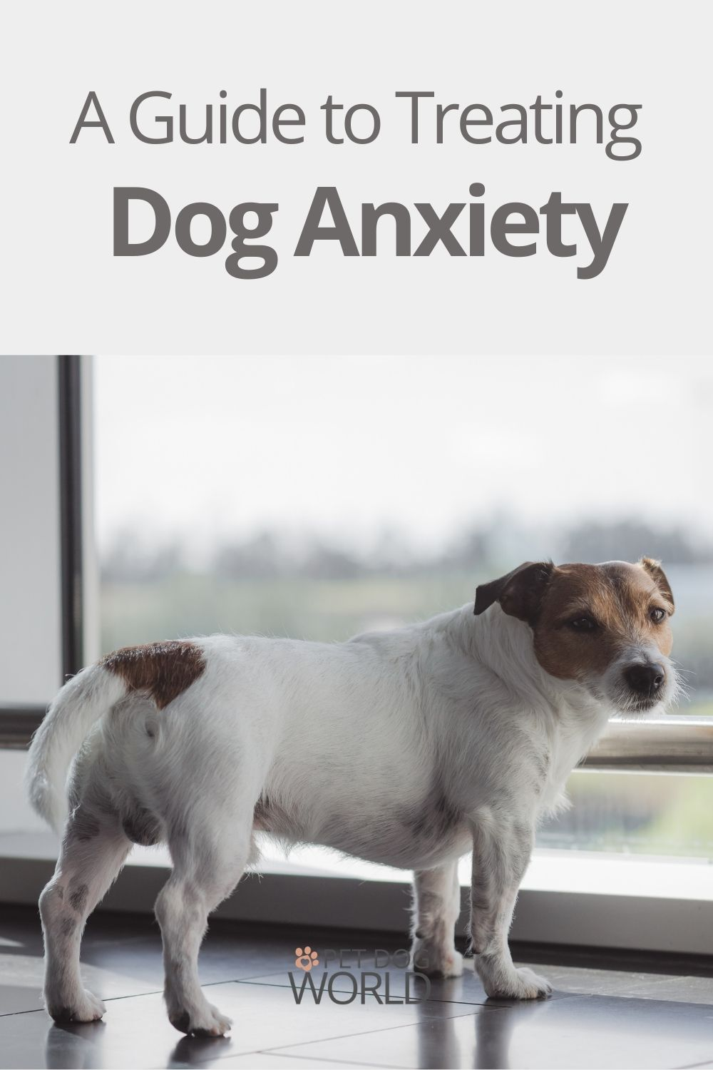 A Guide to Treating Dog Anxiety