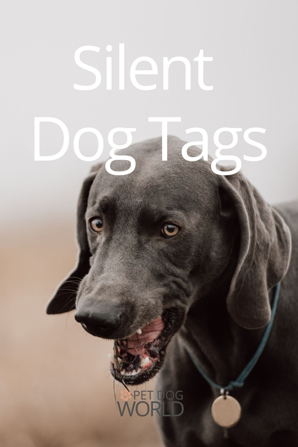 Silent dog tags and fixes to try.
