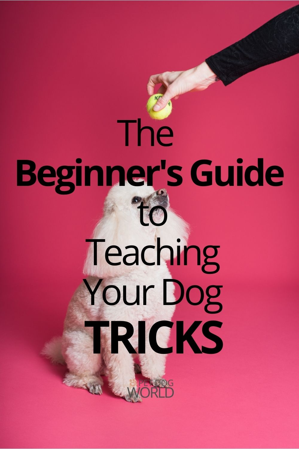 The Beginner's Guide to Teaching Your Dog Tricks